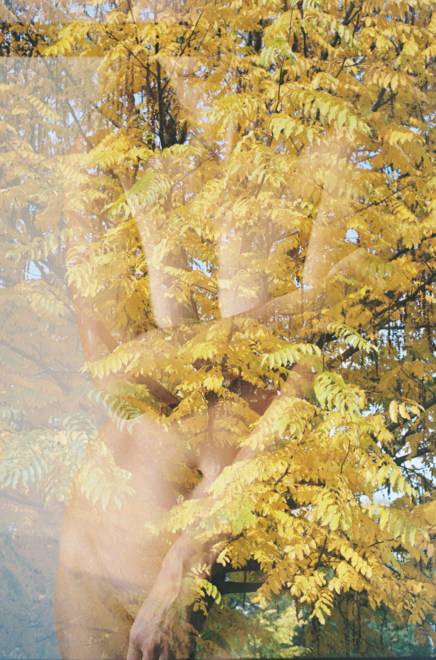 Annelie Bruijn | ElliottHalls Gallery | Autumn | 000027 1